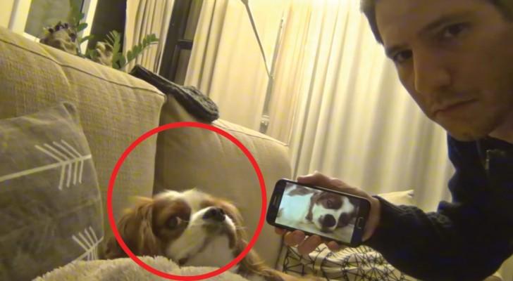 Filma il cane mentre russa e poi gli mostra il video: l'espressione che compare sul muso è esilarante