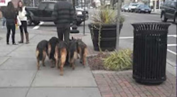 Um homem caminha com os seus quatro cachorros. As coleiras? Não servem!
