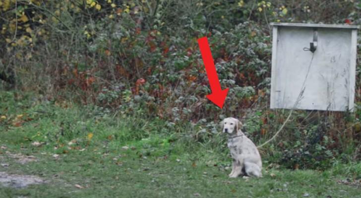 Um menino encontra um cão abandonado: naquele momento sua vida muda para sempre!