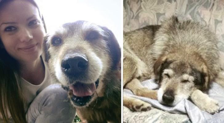 Tutta la vita in canile: l'adozione del cane Lupo è da record e... Bellissima!