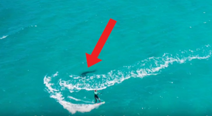 Filma com um drone a namorada que surfa, depois nota uma mancha escura do lado dela...