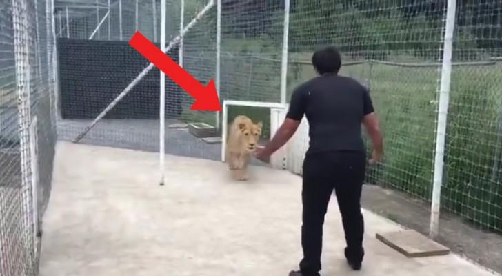 Le dice a la mujer de abrir el porton: aquello que ocurre entre èl y la leona es impresionante
