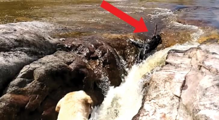 Un perro viene aspirado de la corriente, pero tengan los ojos sobre su amigo...Wow!