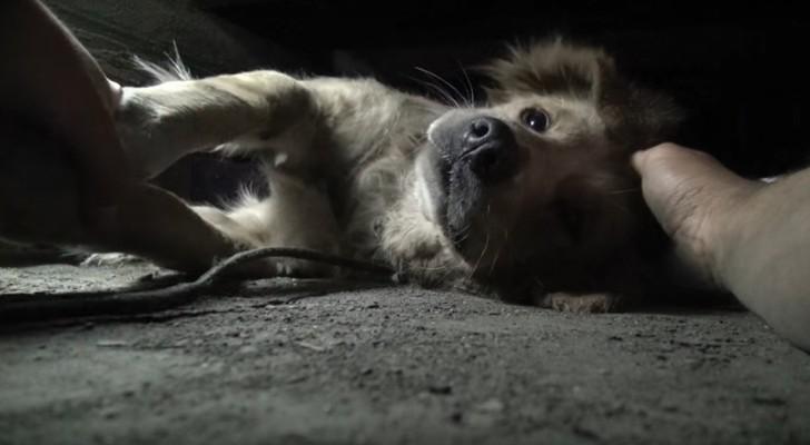 Questo cane aveva la paura nello sguardo: quando riescono a tirarlo fuori è un'altro