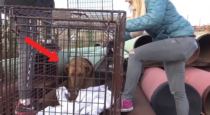 This dog was lovingly rescued from living and hiding in a pipe!