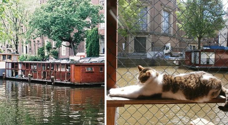 Scoprite la struttura galleggiante di Amsterdam che accoglie i gatti randagi della città