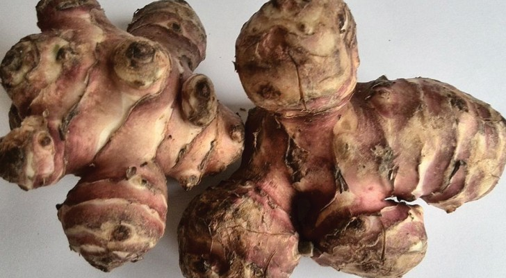 Discover Jerusalem Artichokes -- with these recipes success is guaranteed!