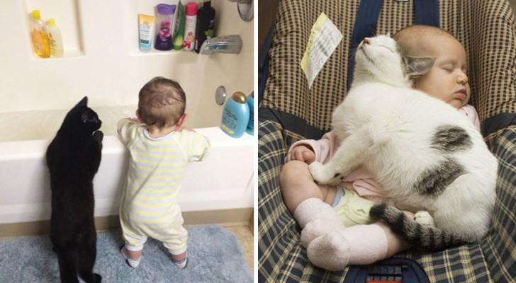 Gatti e bambini sono compatibili? Dopo aver visto queste immagini non avrete più dubbi