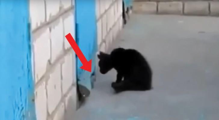 Un chaton aperçoit le museau d'un chien enfermé: voici comme un jeu se transforme en un sauvetage