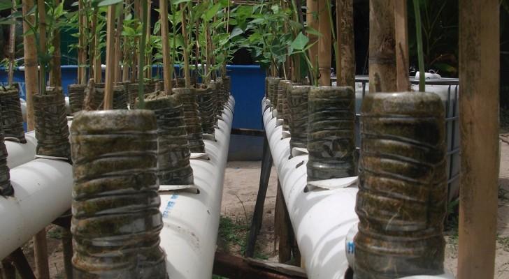 Voici comment produire 190 kg de nourriture dans son jardin en dépensant le strict minimum