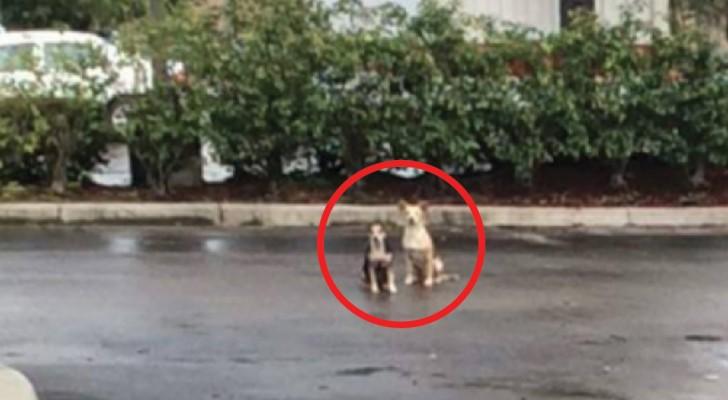 Ze werden achtergelaten op een parkeerplaats: dit is het moment waarop ze werden gered...