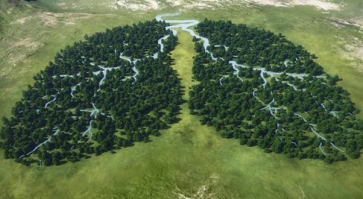 Noorwegen is het eerste land ter wereld dat geen producten koopt die regenwouden vernietigen