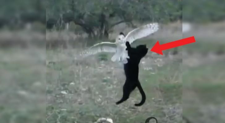 Um gato que ataca uma coruja? Não! Uma linda amizade!