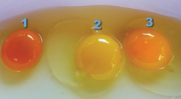 Il colore del tuorlo ci dice molto sull'uovo che stiamo per mangiare: ecco come scoprire se è fresco o no