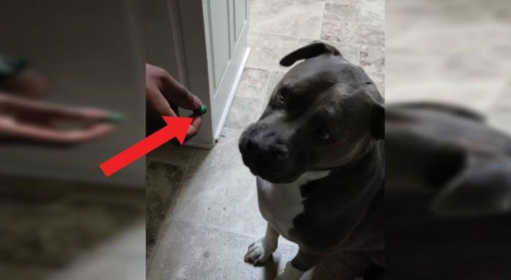 Il padrone offre al cane una caramella asprissima ma al secondo assaggio l'animale SI RIBELLA