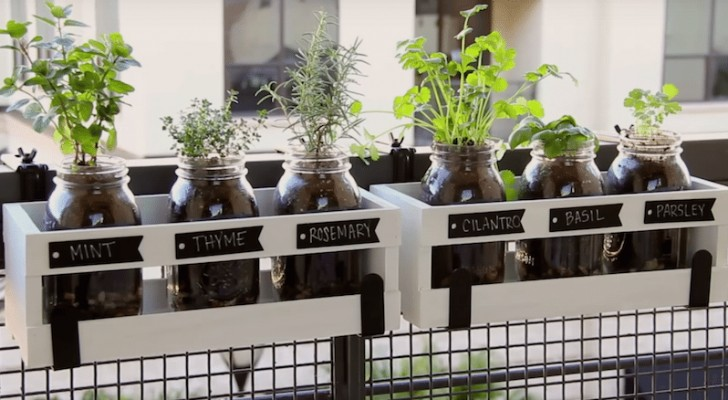 Learn how to use Mason jars to create a home herb garden!