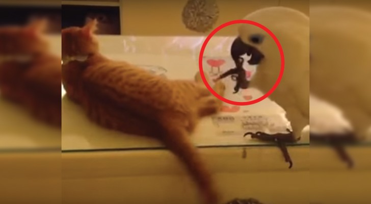 Un pappagallo e la sua lotta per la coda del gatto: ecco il gioco più buffo a cui assisterete