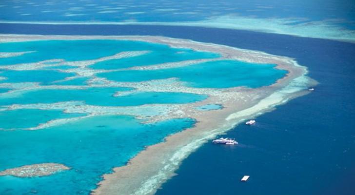 Het great barrier reef is DOODVERKLAARD: het ergste is nog dat we er helemaal niks van leren