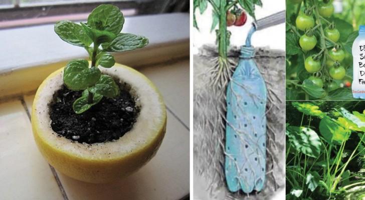 10 Gartentricks die euch zu Pflanzenexperten machen