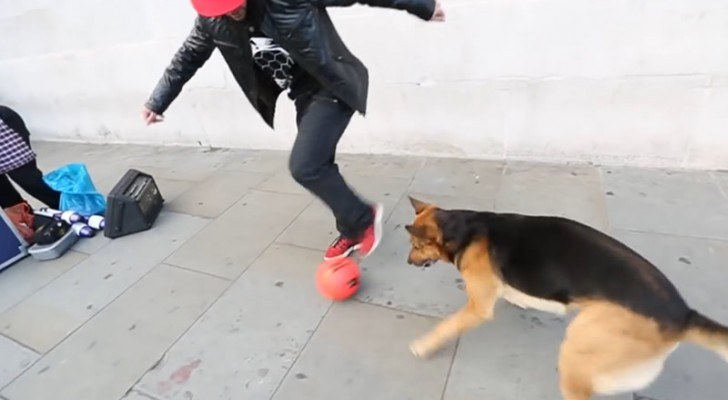 Balltalent vs. Hund