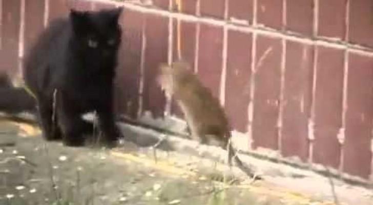 Ich bin eine Ratte und ich habe keine Angst