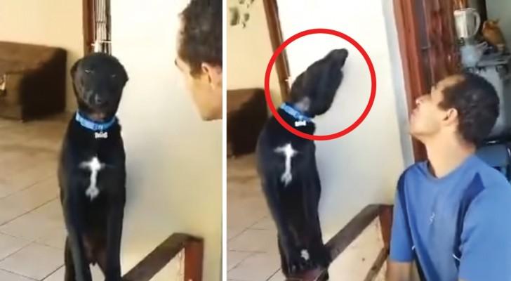 O cão é culpado e sabe muito bem disso, mas ele tenta pedir desculpas em um modo especial...