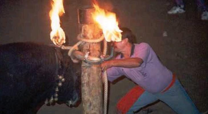 Non solo corrida: ecco le discutibili tradizioni di tori spagnole che non conoscevate