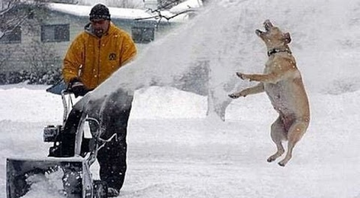 Cats and dogs having fun in the snow