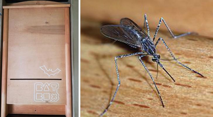 Vous recherchez le remède le plus naturel contre les moustiques? Voici comment « adopter » une chauve-souris