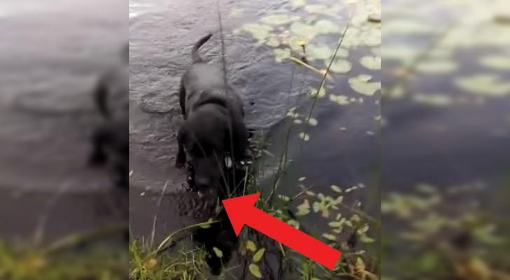 Der Hund sichtet etwas im Wasser und springt hinein: als er wieder am Ufer ist, lobt ihn das Herrchen