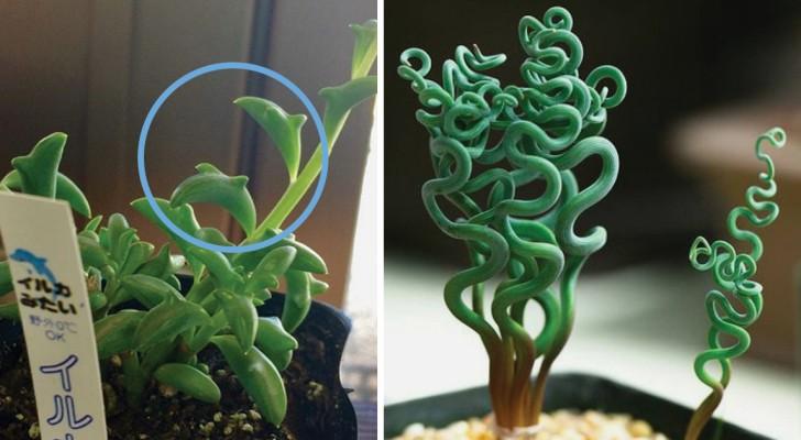Queste piante grasse sono tanto belle quanto particolari for Tutte le piante grasse