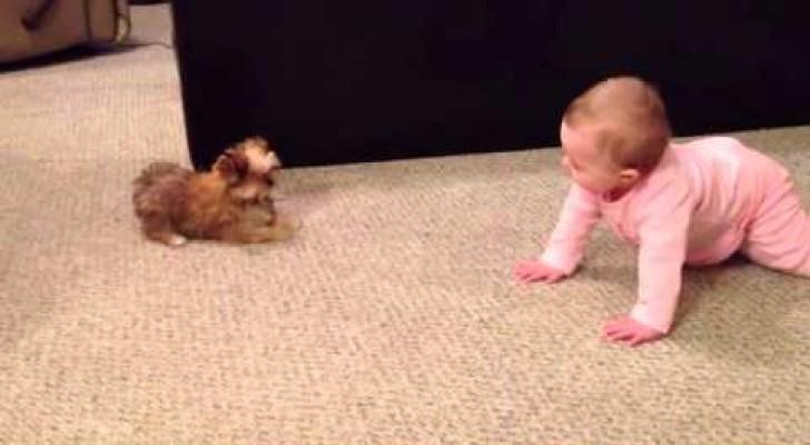 La bambina e il cucciolo si incontrano: il modo in cui comunicano è sorprendente!