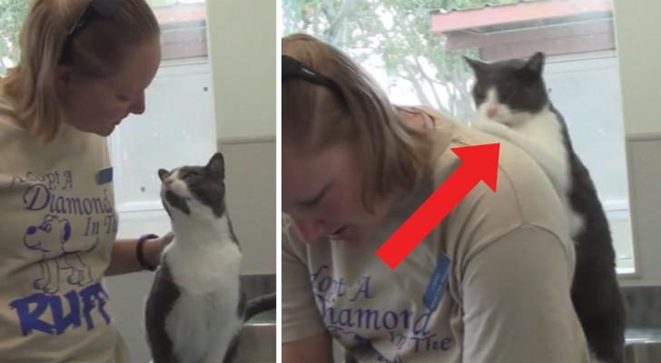 La donna accarezza il gatto ma quando gli chiede di farle a sua volta un massaggino? Fantastico!