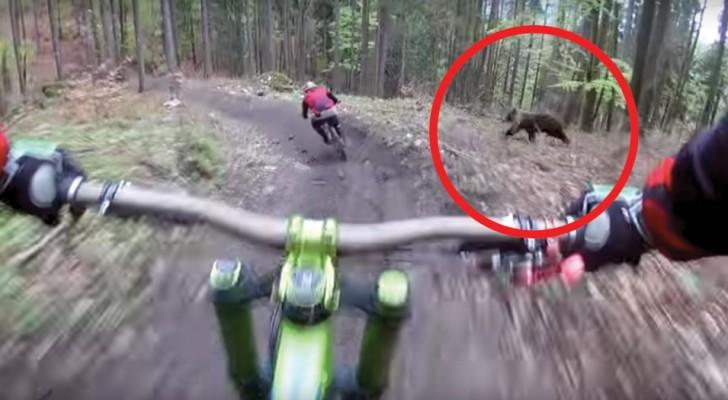 Zwei Radfahrer fahren durch den Wald und machen eine haarsträubende Begegnung