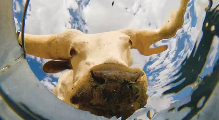 Er stellt einen Eimer Wasser mitten in die Wüste und es entsteht so ein faszinierendes Video