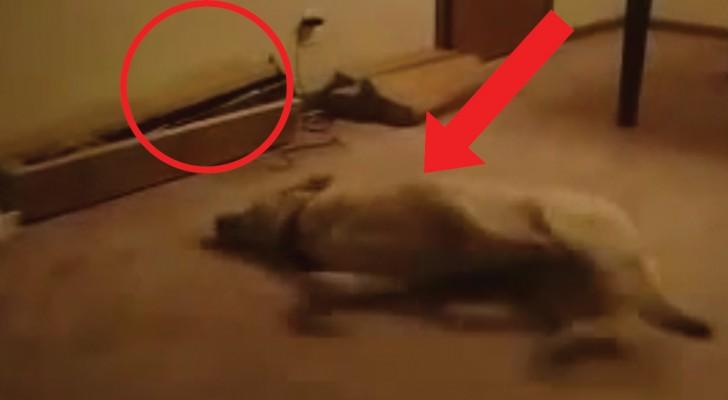 Il cane si agita nel sonno ma ciò che accade alla fine va oltre ogni previsione