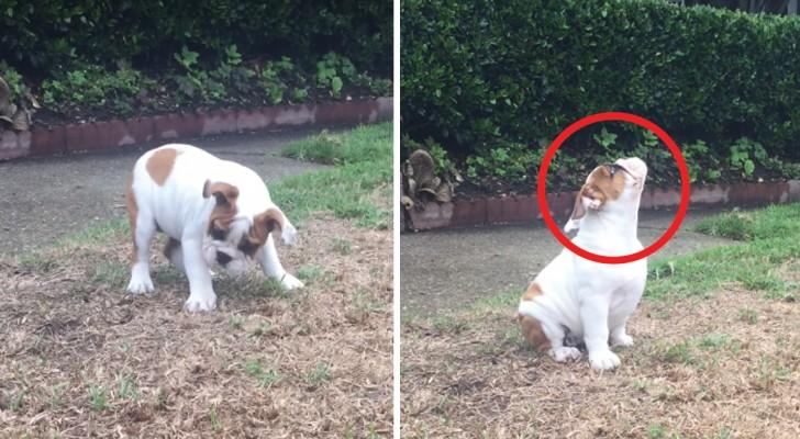 Strane Cose piovono dal cielo: la prima pioggia di questo cucciolo è uno spettacolo!