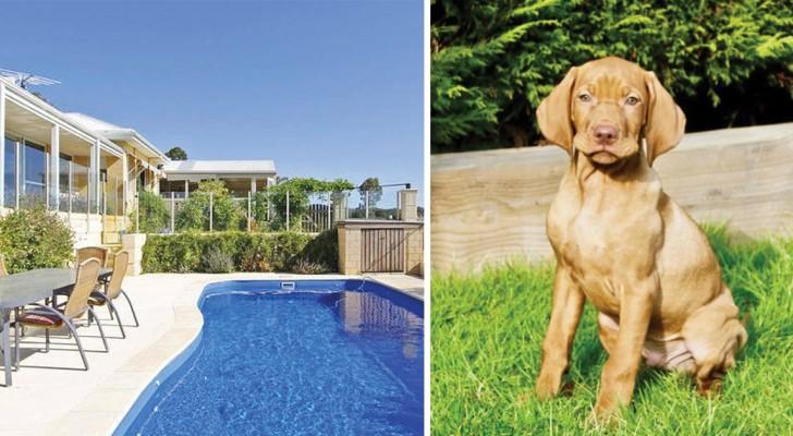 Girare il mondo facendo il dog sitter: questo portale offre una possibilità più unica che rara