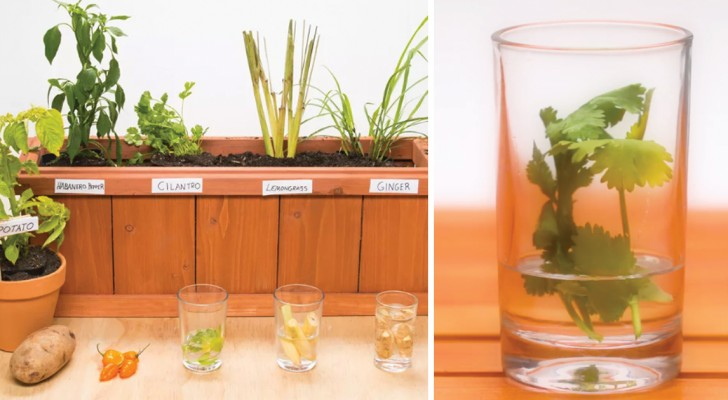 Make a vegetable garden ... from your garbage!