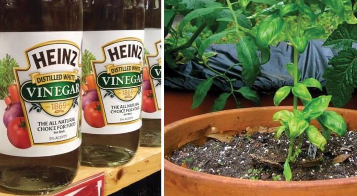 9 Gartenprobleme, die du ganz einfach mit weißem Essig lösen kannst
