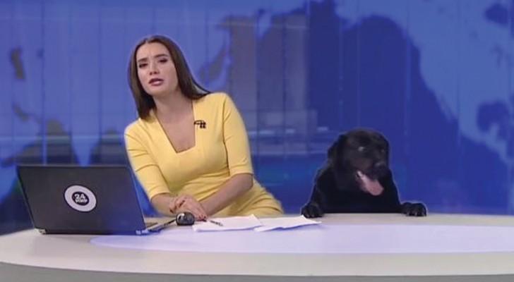 A jornalista está dando a notícia, mas chega alguém inesperado...