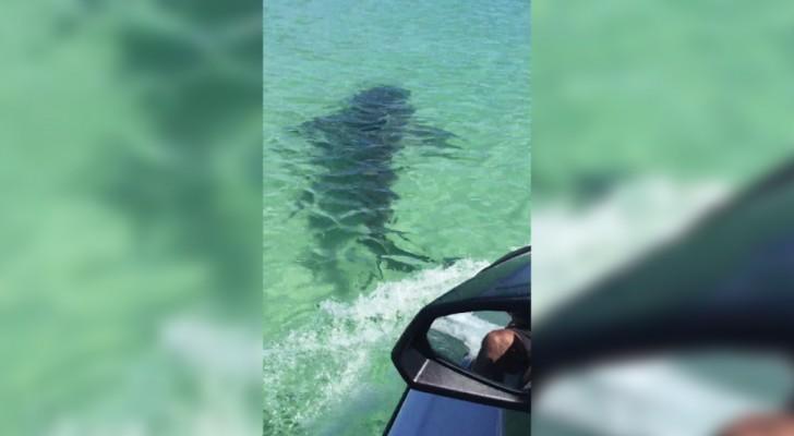 Veem uma mancha escura na água: a ideia de chegar perto para ver o que é se revela péssima!