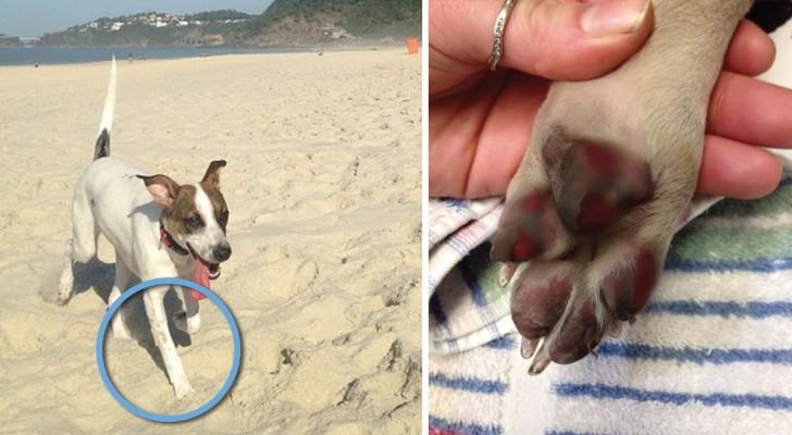 Alle eigenaren van honden zouden de gevaren moeten kennen van hen laten lopen op gloeiend hete ondergronden