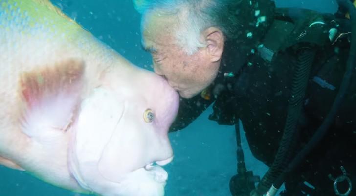 Da 25 anni questo subacqueo giapponese fa visita al suo migliore amico... Sul fondo del mare!