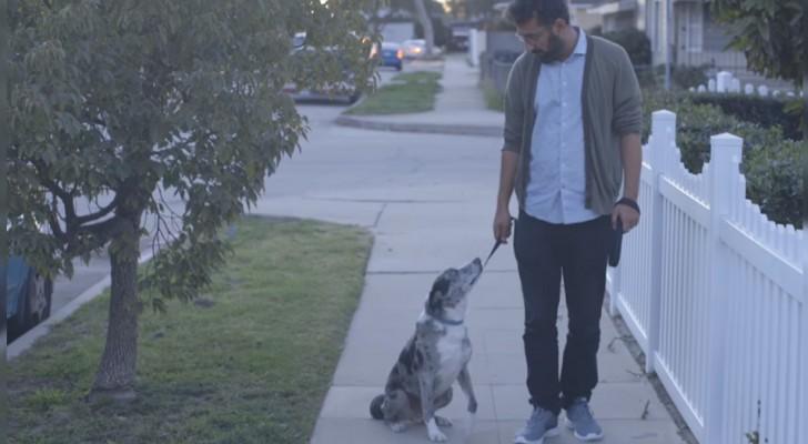 Um homem adota um cachorro do canil. Um dia, enquanto caminham, o cão se senta e olha para ele.