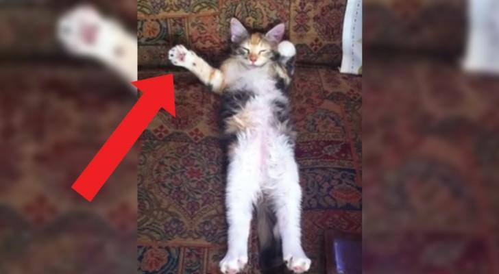Prende la videocamera e filma il gatto che dorme: il risultato è indimenticabile