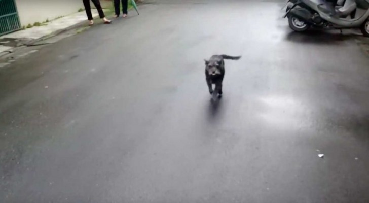 Deze hond is 6 dagen geleden kwijtgeraakt: als ze wordt gevonden door haar baasje is haar reactie aandoenlijk!