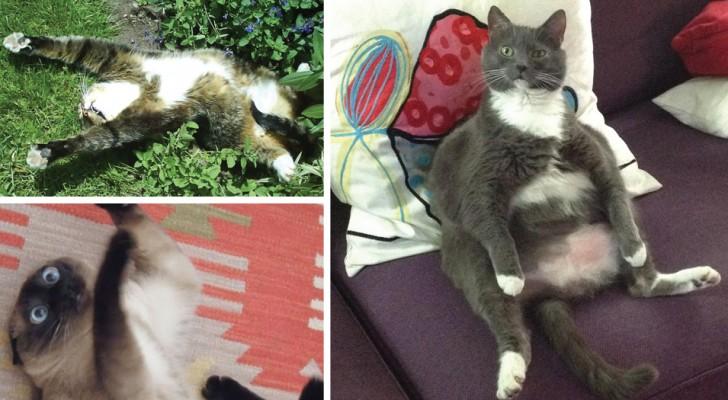19 gatti che hanno trovato l 39 erba gatta e che sono for Erba gatta effetti