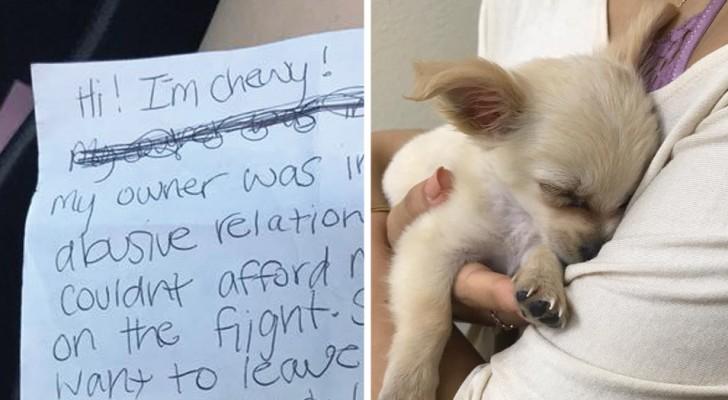 Encontram um cão abandonado no aeroporto: a carta que estava com ele revela uma história muito triste
