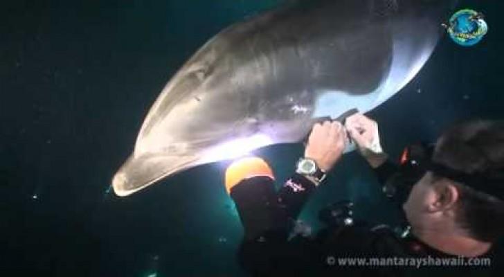 Ein Delfin ruft einen Taucher zur Hilfe